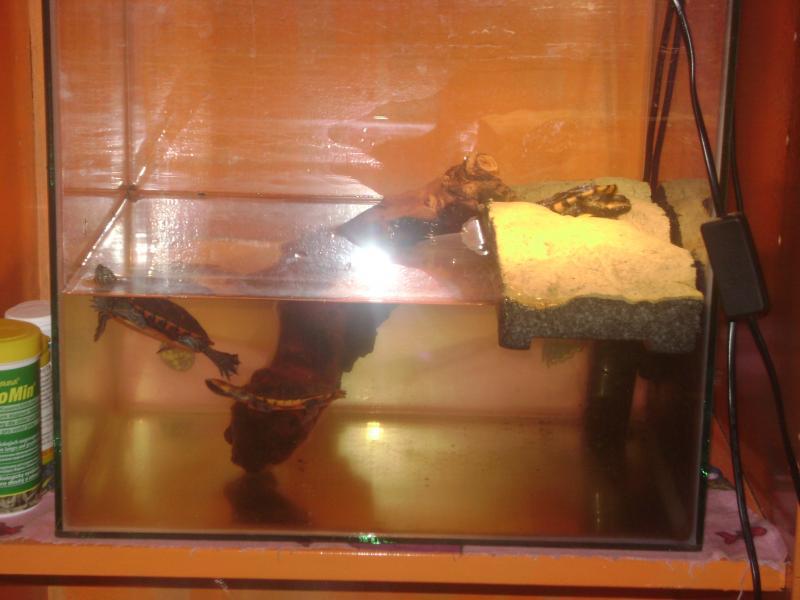 Как можно сделать островок для красноухой черепахи своими руками 36