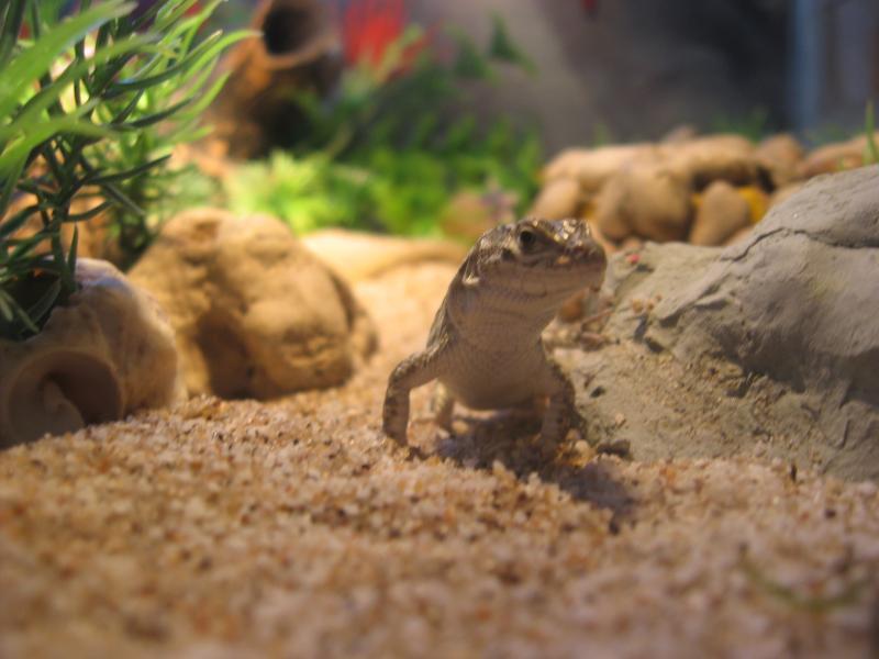 Чем можно кормить ящерицу в домашних условиях 6