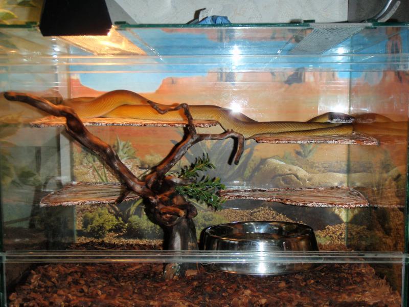 Террариум своими руками для змей 65