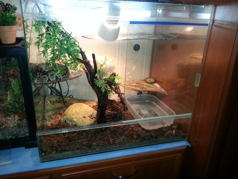 Террариум своими руками для лягушек 34