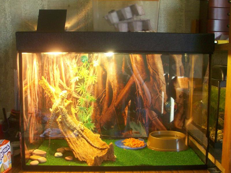 Как сделать аквариум для террариума 647